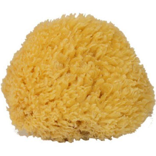 112796 Natursvamp Mediterranean Sponge Medium1